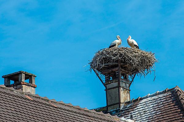 Birds resting in their nest on a chimney.
