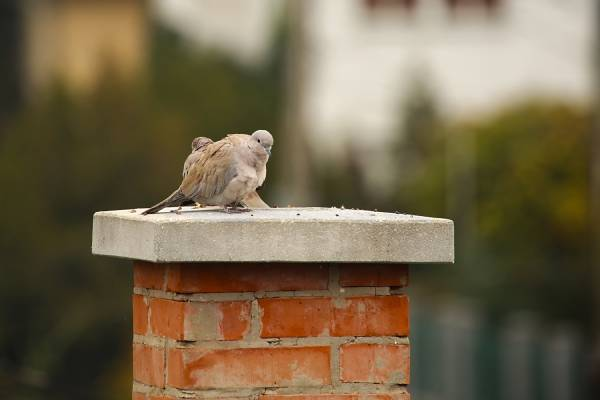 An animal on top of a chimney